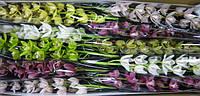 Орхидея Мини х 10 микс