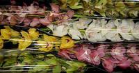 Орхидея х 6 микс, фото 1