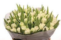 Тюльпан Пион. Кремовый, фото 1