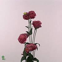Эустома Розовая, фото 1