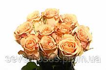 Роза Cappuccino 40см