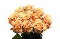 Роза Cappuccino 50см, фото 1