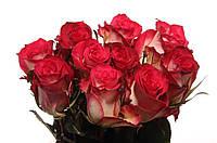 Роза Double Date 70см, фото 1