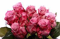 Роза Maritim 80см