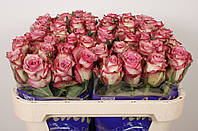 Роза Melina 70см, фото 1