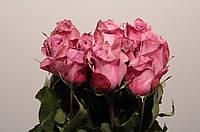 Роза New Orleans 80см, фото 1