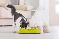 Как правильно выбрать корм для кота и собаки?