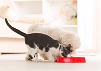 Сухой корм и мочекаменная болезнь у котов и собак