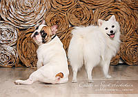 Фотосъемка / фотосессия животных, людей, товаров