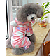 Комбинезон для собаки (Код: 0153), фото 2
