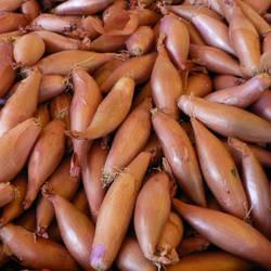 Лук желтый длинный TOP Onions