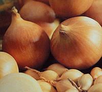 Лук желтый овальный TOP Onions