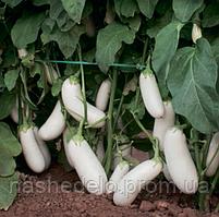 Семена баклажана Аретуза F1 100 семян Rijk Zwaan