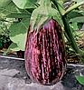 Семена баклажана Лейре F1 100 семян Rijk Zwaan