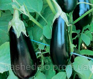 Семена баклажана Шарапова F1 100 семян Rijk Zwaan