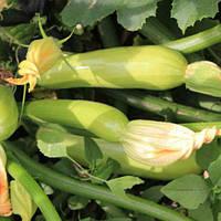 Семена кабачка Аделия F1 500 сем. Энза
