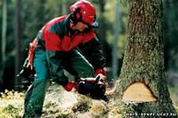 Набираємо фахівців з праці в лісі (бензопила) у Польщу