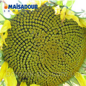 Семена подсолнечника MAS 86.CP