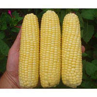 Семена кукурузы Леженд F1 Clouse 1кг