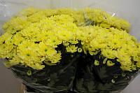 Хр-ма T Baltica Yellow, фото 1