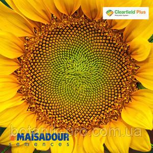 Семена подсолнечника MAS 92.CP