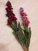 Цветы Дельфиниум цвет в ассортименте