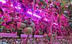 Світлодіодний фитосветильник SL-010F 10W лінійний (fito spectrum led) Код.58739, фото 3