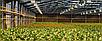 Светильник для растений с фитосветодиодами Highbay SL-150/FS 150W IP65 Код.58819, фото 4