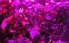 Светодиодный фитосветильник купольный  Highbay SL-100/F 100W FITO FULL spectrum Код.58824, фото 5