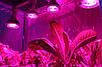 Светодиодный фитосветильник купольный  Highbay SL-100/F 100W FITO FULL spectrum Код.58824, фото 6