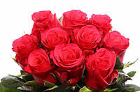 Роза Tacazzi 80см, фото 1