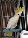 Присада - пенза для попугая очень прочная, фото 5