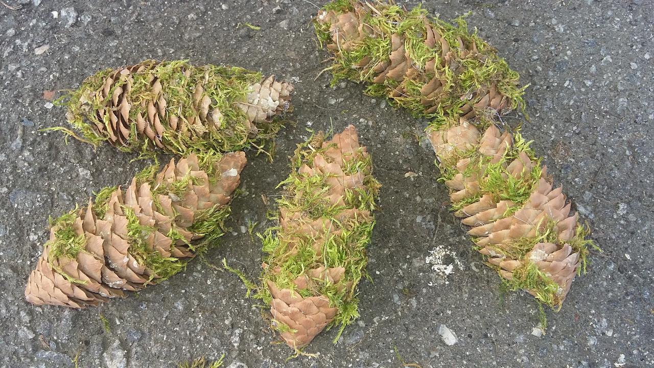Шишки ялинки декоровані зеленим мохом, 5 шт\уп, 25 грн