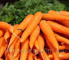 Семена моркови Бриллианс  F1(Бріліанс) 100 000 семян  Nunhems