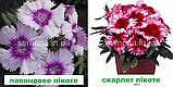 Гвоздика Діана F1 (колір на вибір) 100 шт. китайська, фото 4
