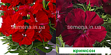 Гвоздика Діана F1 (колір на вибір) 100 шт. китайська, фото 8
