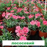 Гвоздика Діана F1 (колір на вибір) 100 шт. китайська, фото 7