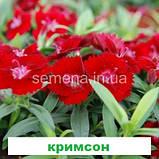 Гвоздика Чібо F1 (колір на вибір) 100 шт., фото 7