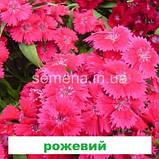 Гвоздика Чібо F1 (колір на вибір) 100 шт., фото 3