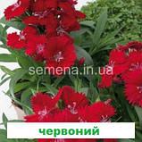 Гвоздика Чібо F1 (колір на вибір) 100 шт., фото 8