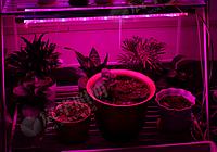 Фитолампа светодиодная LED, фото 3