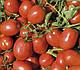 Семена томата Дельфо F1 1000 семян Nunhems , фото 4