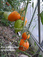 Семена Томат индетерминантный Воловье(Бычье) Сердце оранжевое 30 семян Riva