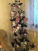 Арка наклонная, подставка для цветов на 18 колец