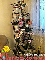 Арка наклонная, подставка для цветов на 18 орхидей