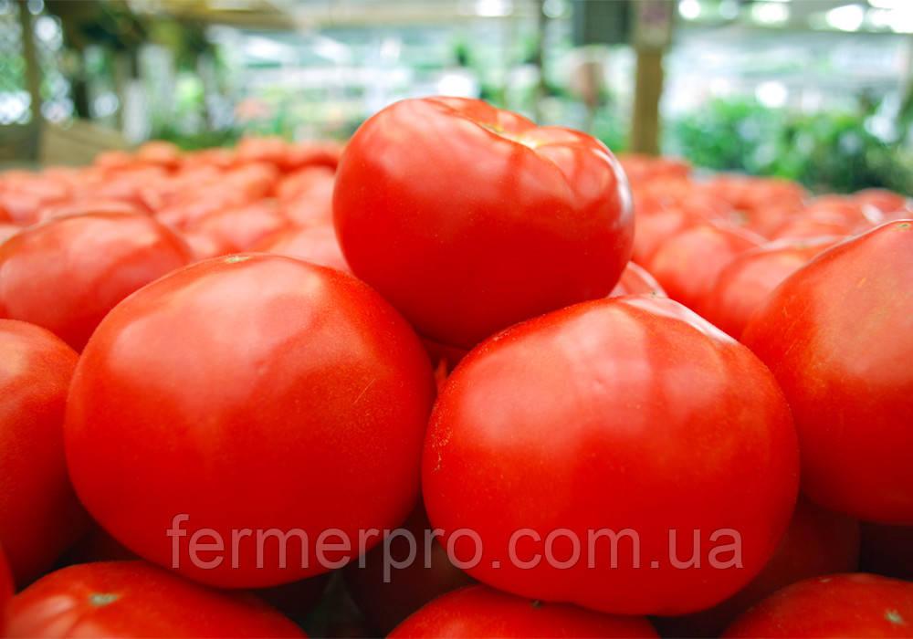 Насіння томату Майсалун F1 1000 насінин Nunhems