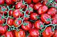 Семена Томата Адванс F1 5000 семян Nunhems  , фото 4