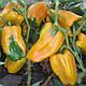 Семена перца Джемини F1 1000 семян Nunhems , фото 4