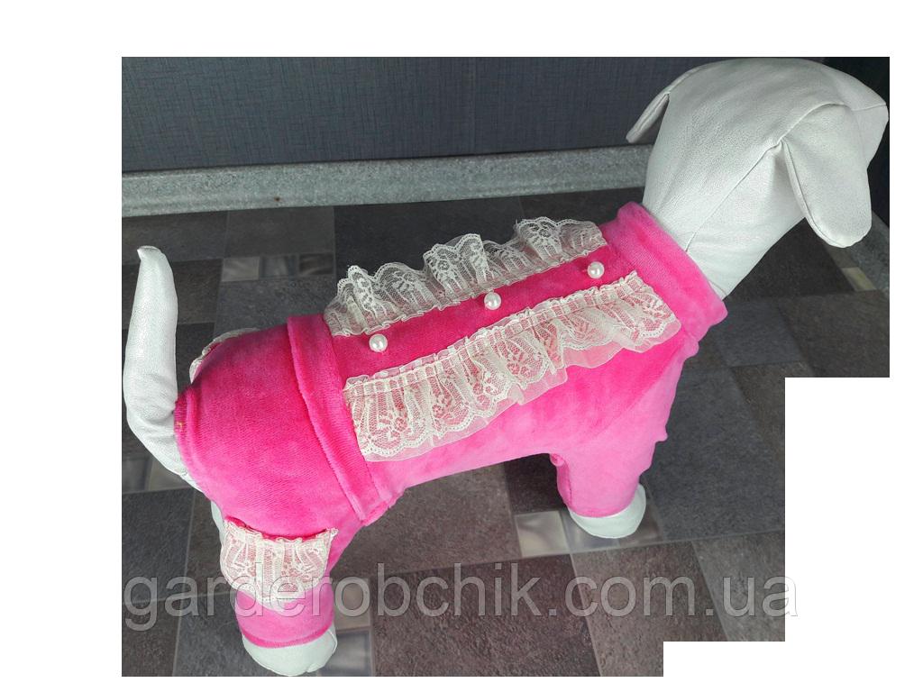 Велюровый комбинезон, костюм для собаки D-17. Одежда для животных