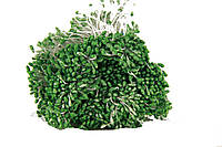Цветочная тычинка  0,3см  зеленая 1800шт, фото 1